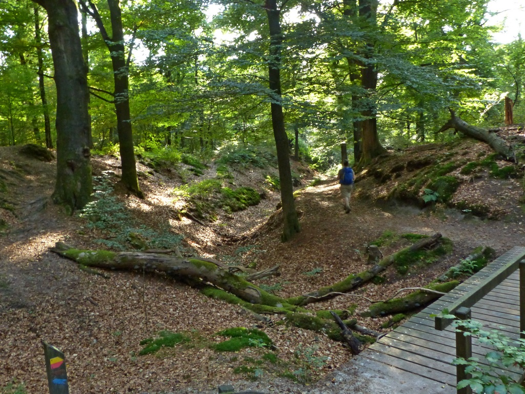 wandeling-wolfheze-10-km