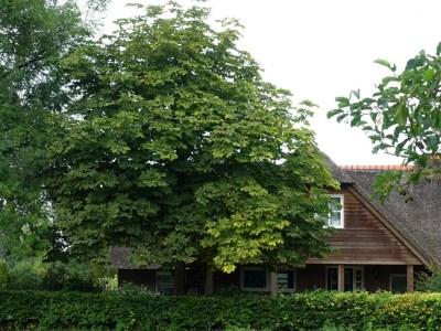 Noardlike Fryske Wâldenpad - boerderij
