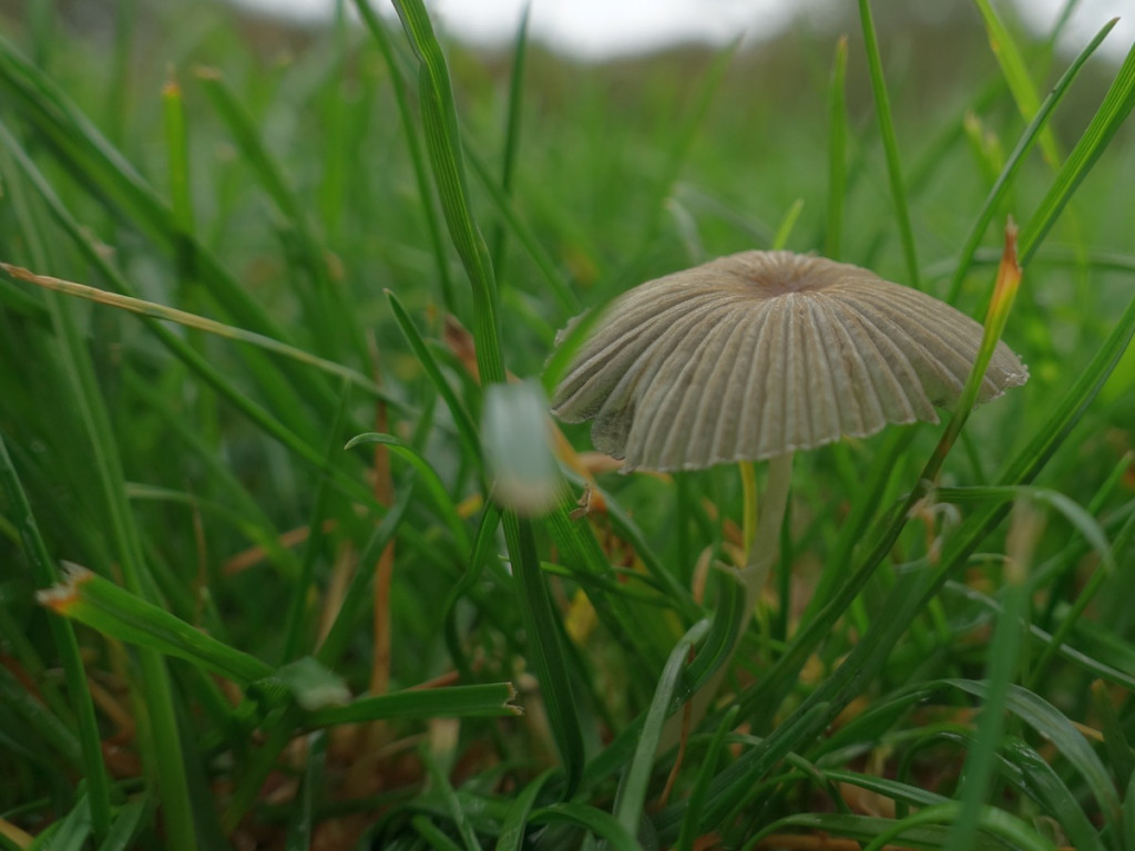 16 paddenstoel