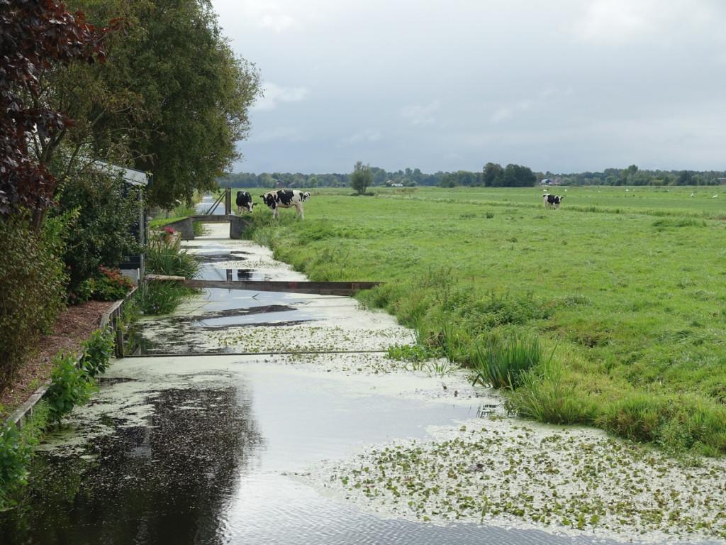 8 polders