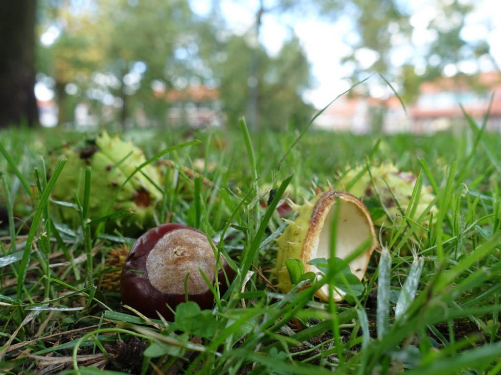 18 Herfst in Amersfoort