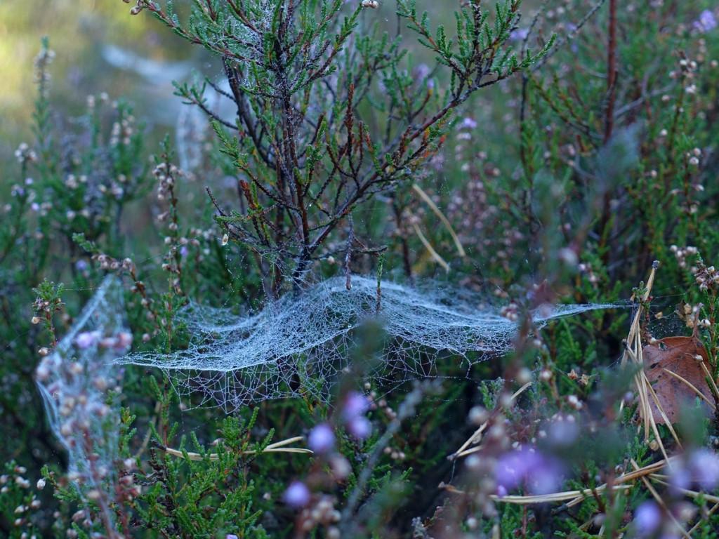 wandeling 3 spinnenweb
