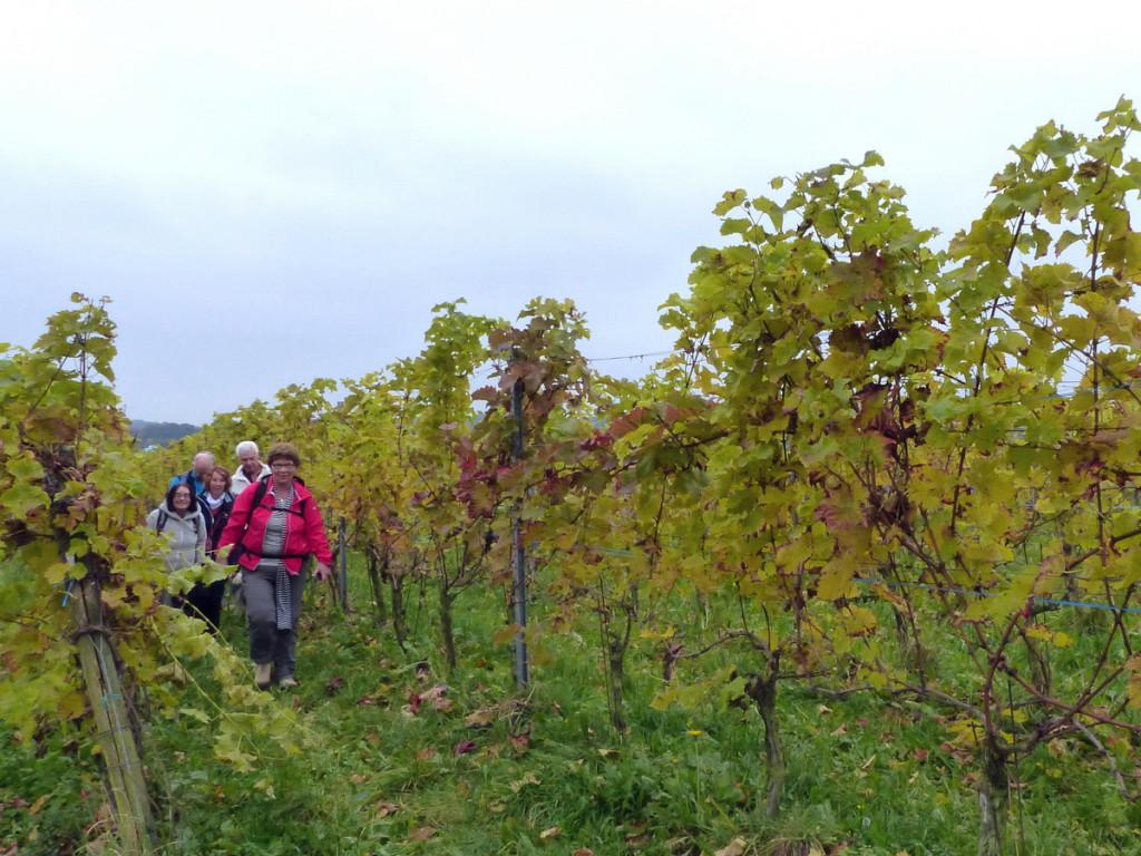 Wijnwandeling Groesbeek wandelen door de wijngaard -klein
