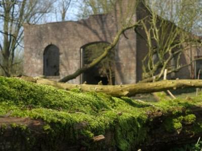 Oude steenfabriek met mos