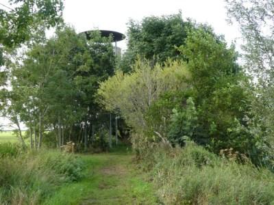 Uitkijktoren verscholen tussen de bomen