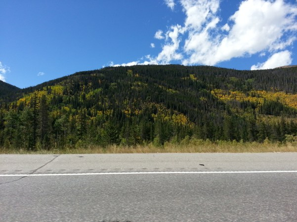 The yellow of the Aspens just pop out from the green of the pines.