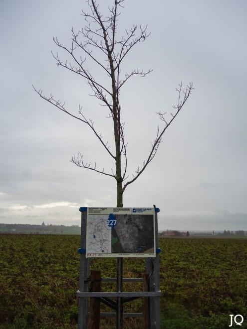 2019-12-23 Wijtschate-32