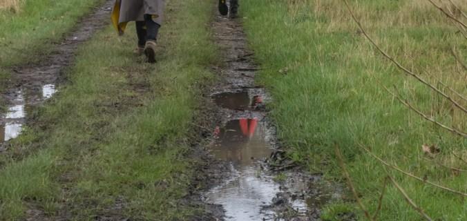 Houtland; overgang zandstreek en zandleemstreek