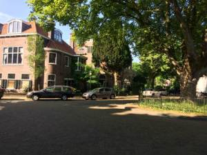 Boom plein Prinsevinkenpark