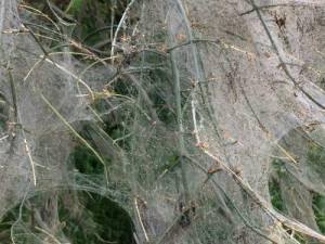 Rupsen in een boom