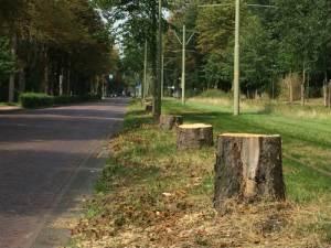 Gekapte bomen op de Scheveningseweg