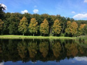 Bomen aan de overkant van het water