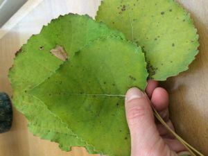 Groen herfstbladeren
