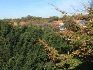 Uitzicht Vogelwijk