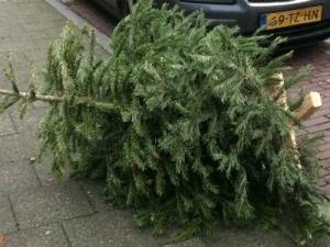 Puntgave kerstboom op straat