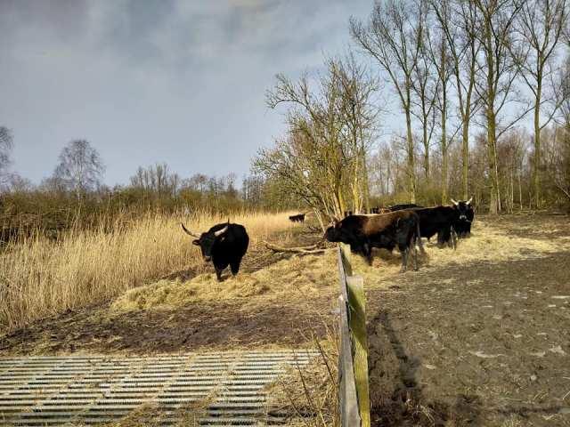 Ochtendwandeling in Flevoland