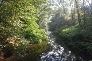 Deze foto is genomen tijdens mijn wandeling in De Rietbeemd in Deux-Acren. Wandelfluisteraar.com
