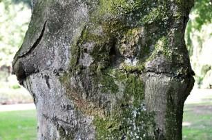 Stam van een boom met mos