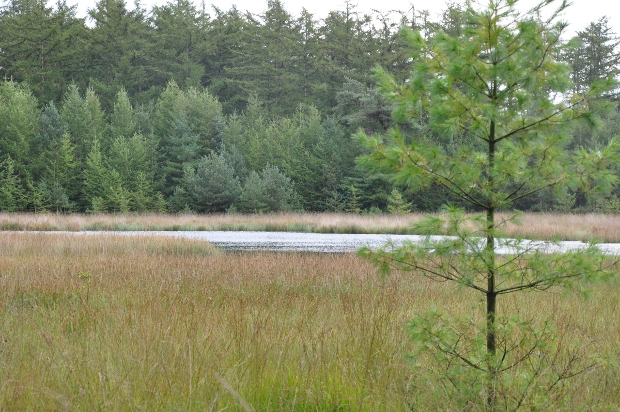 Drents Friese Wold (15)