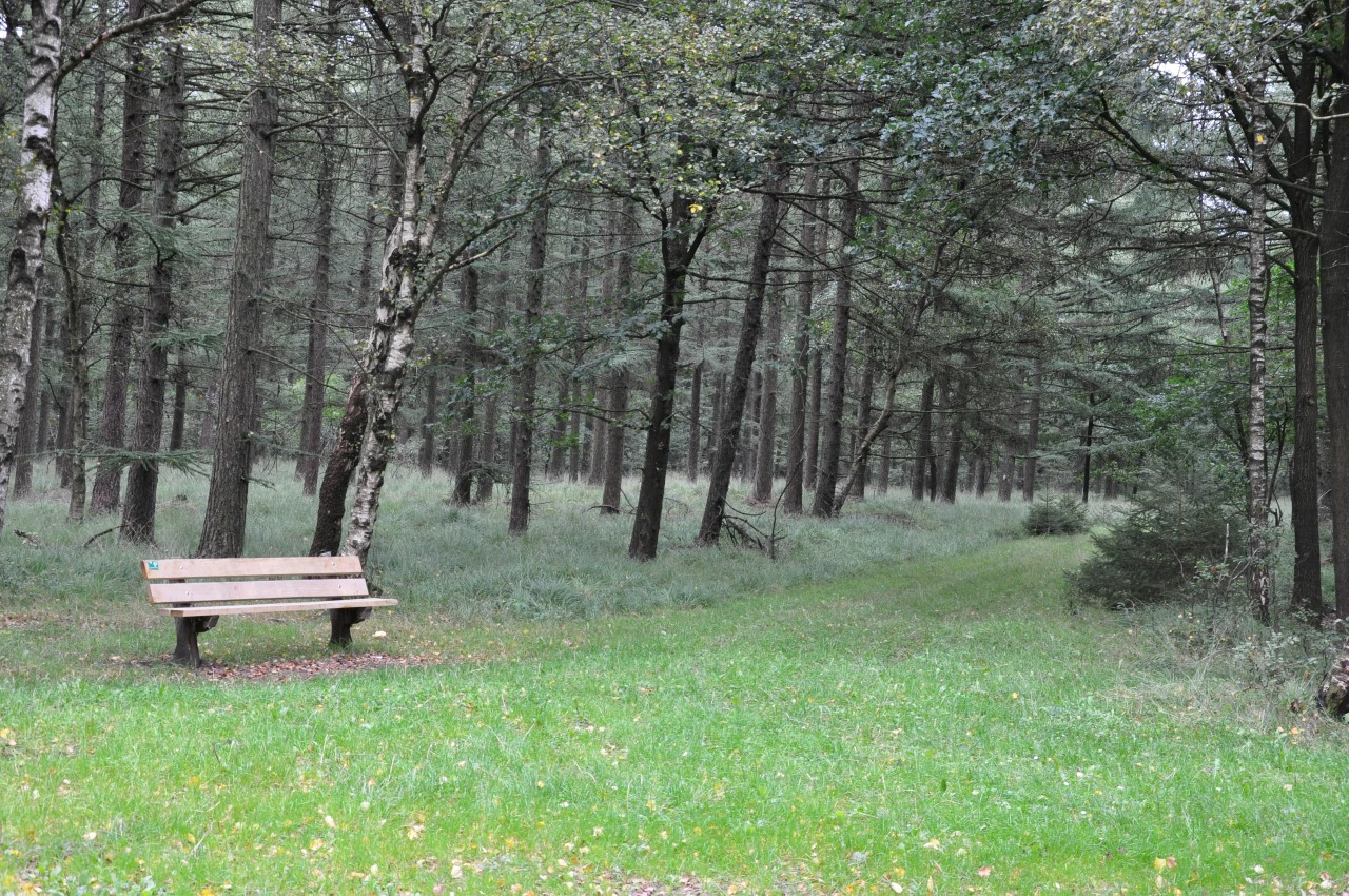 Drents Friese Wold (5)