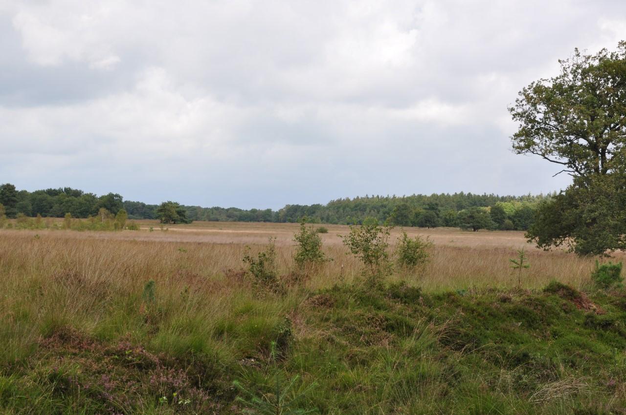 Wapserveld