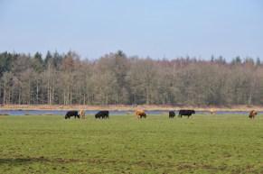 Drenthe: Gees 21 KM