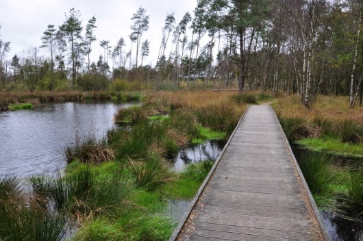 Friesland Delleboersterheide en Diakonievene