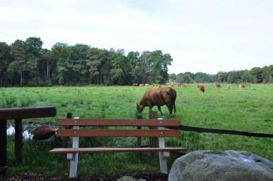 Wandelbankje Oktober 2017 Noordlaarderbos-Vijftig Bunder Drenthe