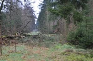 Boswachterij Hooghalen