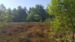 Drents Friese Wold