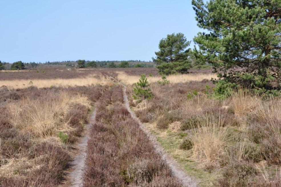 Houtdorper- en Speulderveld