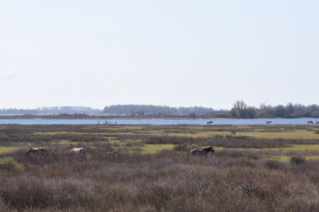 Wandelroute Lauwersmeer