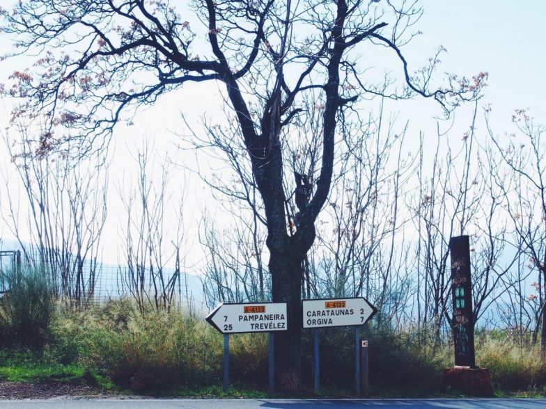A tall tree with no leaves. Two white road signs at the bottom point in opposite directions towards small Spanish towns.