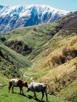 Thinking of doing the Kazbegi to Gergeti Trinity Church hike in Republic of Georgia? Don't attempt the trek without reading these essential tips first! | © Emily Lush 2017