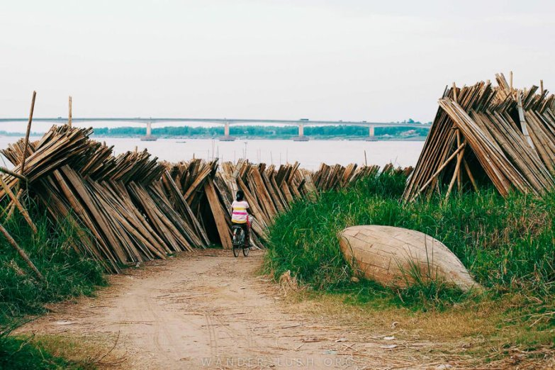 A woman on a push bike rides down a dirt path with stacks of bamboo poles on either side.