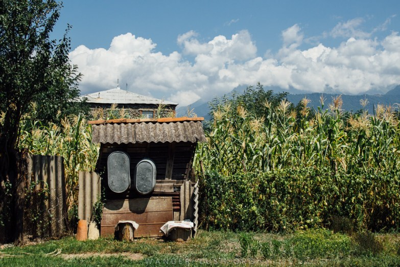 A tin shed in a corn field in Pankisi Gorge.