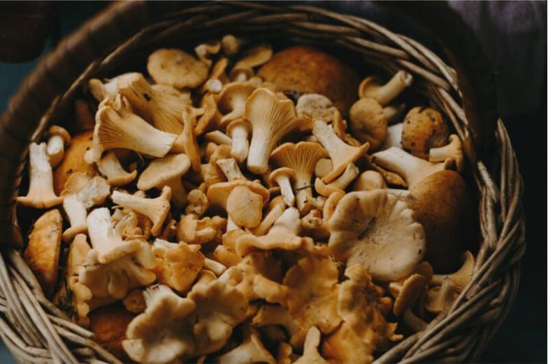 A basket of freshly picked mushrooms.