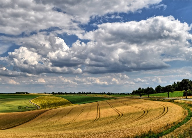 Getreidefeld bei Gillenfeld im Juli 2015