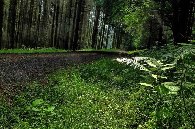 panoramaweg-9133