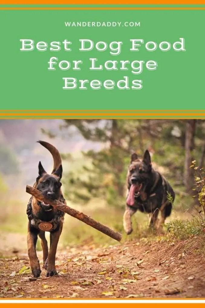 Best Dog Food for Large Breeds