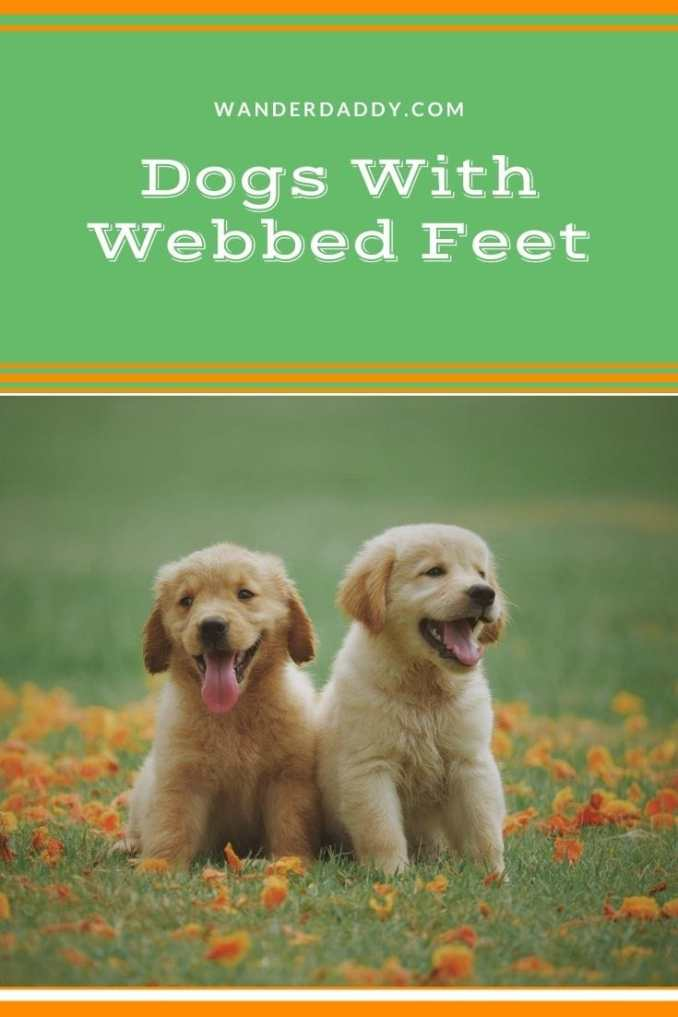 Dogs with Webbed Feet (1)