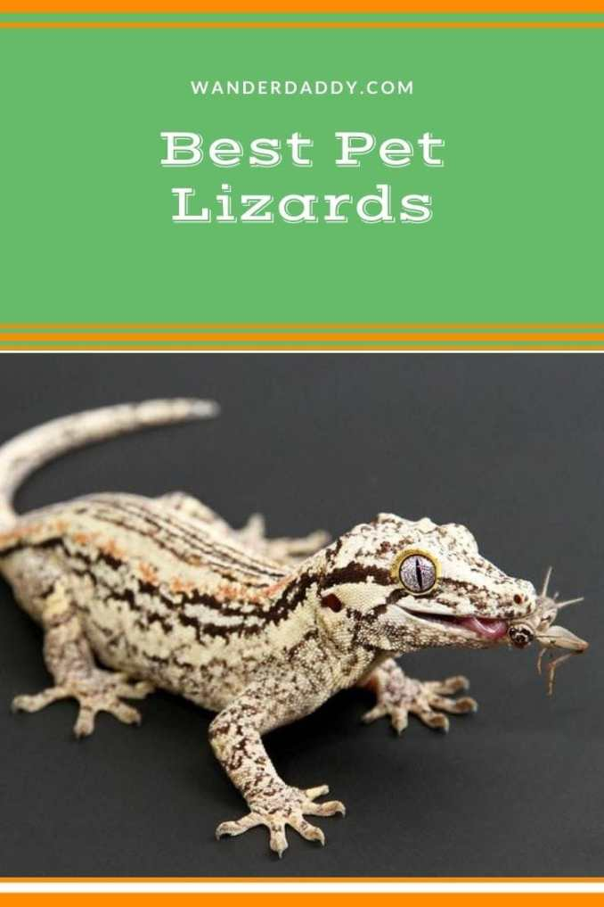 Best Pet Lizards