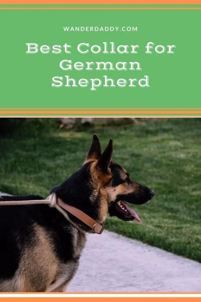 Best Collar for German Shepherd