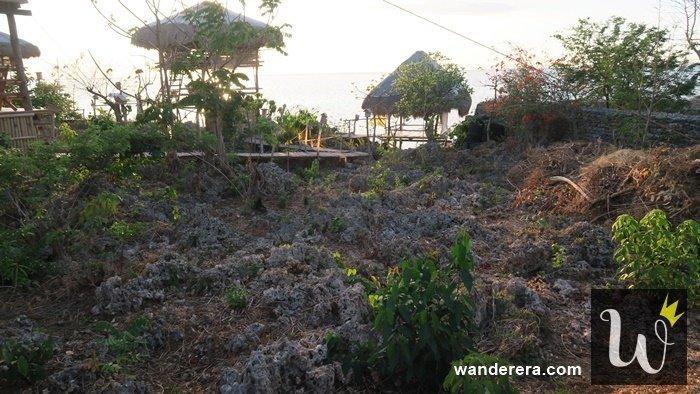 Birdland Beach Club Corals