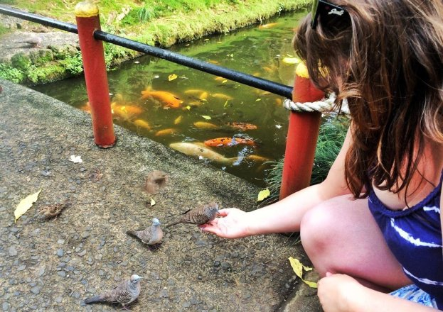 Feeding birds at Byodo-In Temple