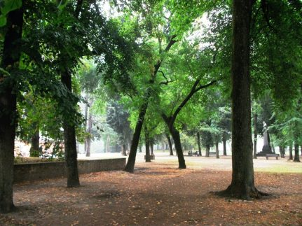 Lucca trees