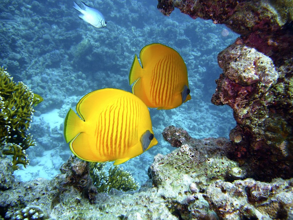 Colourful fish in the ocean