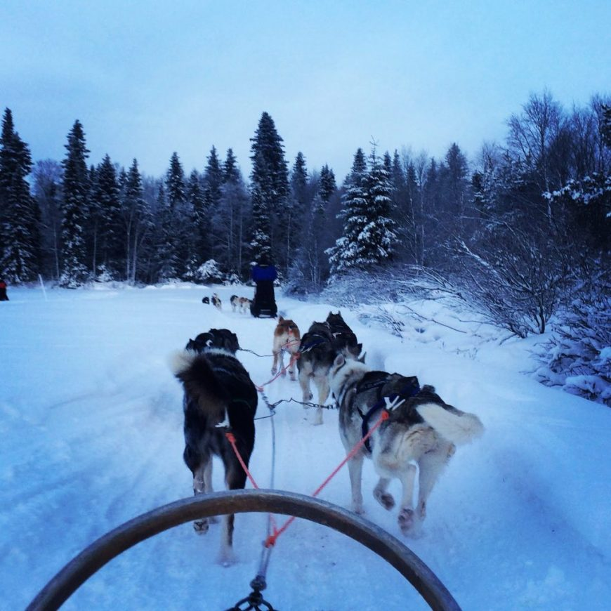 Husky Sledding in Ruka, Finland