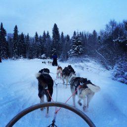 Husky Sledding in Ruka, Finland