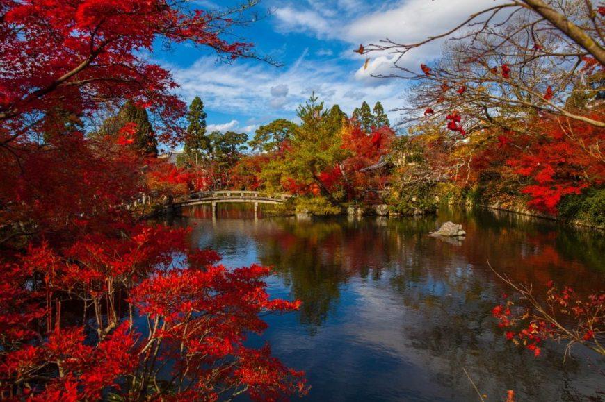 Tokyo Fall